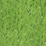 Grassy-meadow-27-grass1